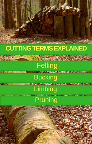 Felling, bucking, pruning and limbing – cutting terms explained