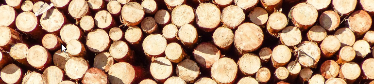 How much is a cord of wood? – And other useful information